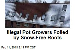 Illegal Pot Growers Foiled by Snow-Free Roofs