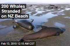 200 Whales Stranded on NZ Beach