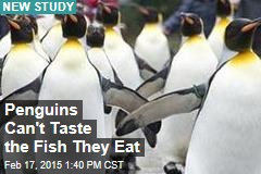 Penguins Can't Taste Fish: Study