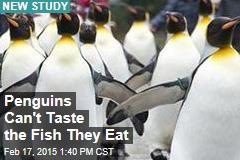 Penguins Can't Taste Fish: Study