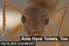 Ants Have Toilets, Too