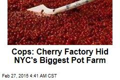 Cops: Cherry Factory Hid Biggest NYC Pot Farm