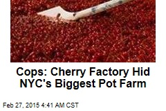 Cops: Cherry Factory Hid Biggest NYC Pot Farm