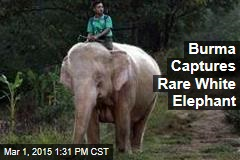 Burma Captures Rare White Elephant