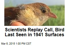 'Extinct' Bird Sings to Scientists in Burma