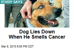 Trained Dog Can Smell Your Cancer