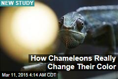 How Chameleons Really Change Their Color