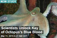 Scientists Unlock Key of Octopus's Blue Blood