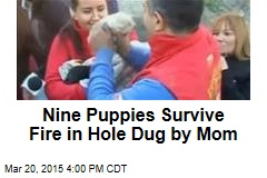 Nine Puppies Survive Fire in Hole Dug by Mom