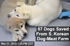 57 Dogs Saved From S. Korean Dog-Meat Farm