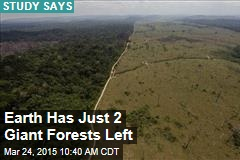 Earth Has Just 2 Giant Forests Left