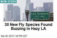 30 New Fly Species Found Buzzing in Hazy LA