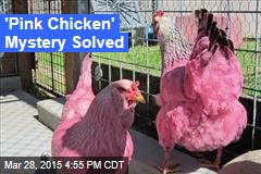 'Pink Chicken' Mystery Solved