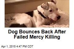 Dog Bounces Back After Failed Mercy Killing