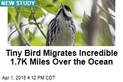 Tiny Bird Migrates Incredible 1.7K Miles Over the Ocean
