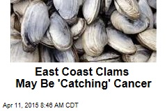 East Coast Clams May Be 'Catching' Cancer