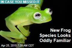 New Frog Species Looks Oddly Familiar