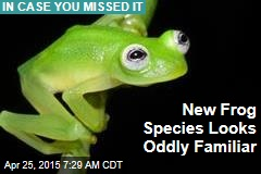 New Frog Species Looks Oddly Familiar