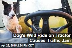 Dog's Wild Ride on Tractor Causes Traffic Jam