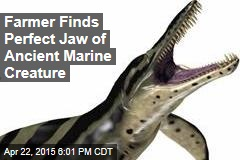 Farmer Finds Perfect Jaw of Ancient Marine Creature