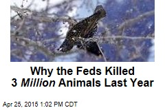 US Kills 3M Animals a Year to Protect Wildlife