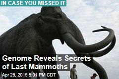 Genome Reveals Secrets of Last Mammoths