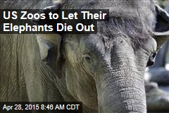 US Zoos to Let Their Elephants Die Out