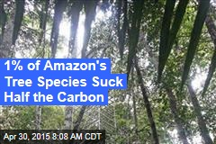 1% of Amazon's Tree Species Suck Half the Carbon