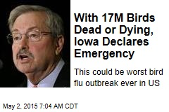 With 17M Birds Dead or Dying, Iowa Declares Emergency