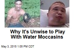 Why It's Unwise to Play With Water Moccasins