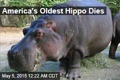 America's Oldest Hippo Dies