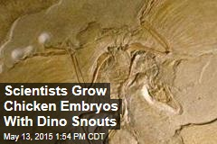 Scientists Grow Chicken Embryos With Dino Snouts