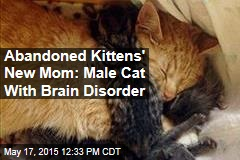Abandoned Kittens' New Mom: Male Cat With Brain Disorder