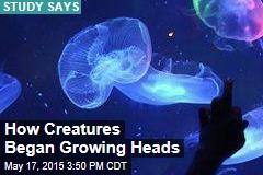 Study: How Animals Grew Heads