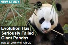 Evolution Has Seriously Failed Giant Pandas