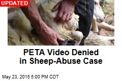 Sheep Suffer Verbal Abuse, PETA Claims