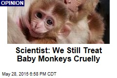 Scientist: We Still Treat Baby Monkeys Cruelly