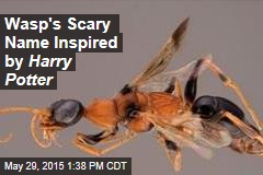 Wasp's Scary Name Inspired by Harry Potter