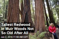 Tallest Redwood in Muir Woods Not So Old After All