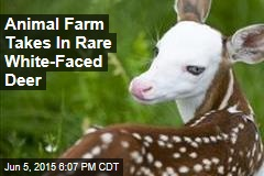 Animal Farm Takes In Rare White-Faced Deer