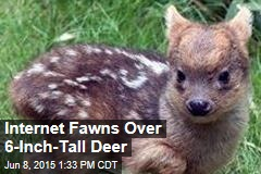 World's Tiniest Deer Species Gets New Member