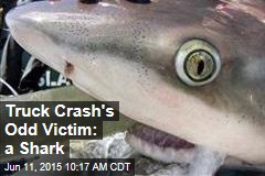 Truck Crash's Odd Victim: a Shark