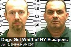Dogs Get Whiff of NY Escapees
