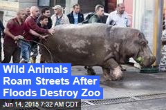 Wild Animals Roam Streets After Floods Destroy Zoo