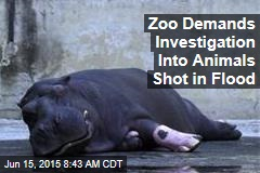 Zoo Demands Investigation Into Animals Shot in Flood