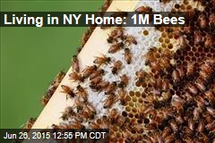 Living in NY Home: 1M Bees
