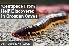 'Centipede From Hell' Discovered in Croatian Caves