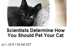 Scientists Determine How You Should Pet Your Cat