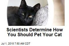 Scientists Determine How You Should Pet Your Cat
