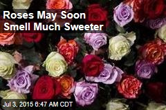 Roses May Soon Smell Much Sweeter